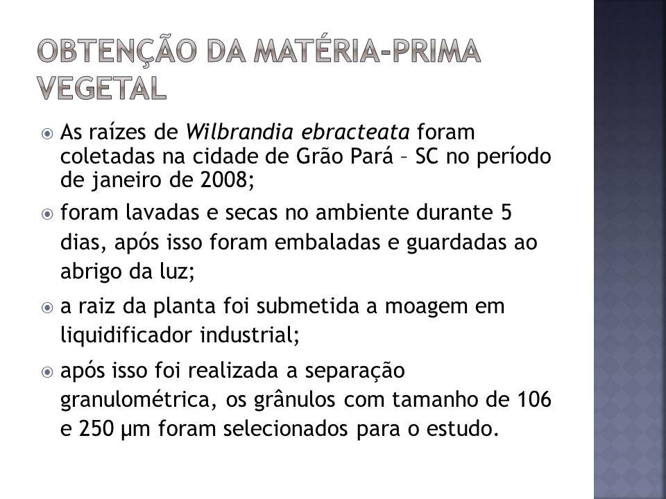 As raízes de Wilbrandia ebracteata foram coletadas na cidade de Grão Pará – SC no período de janeiro de 2008; foram lavadas e secas no ambiente durant