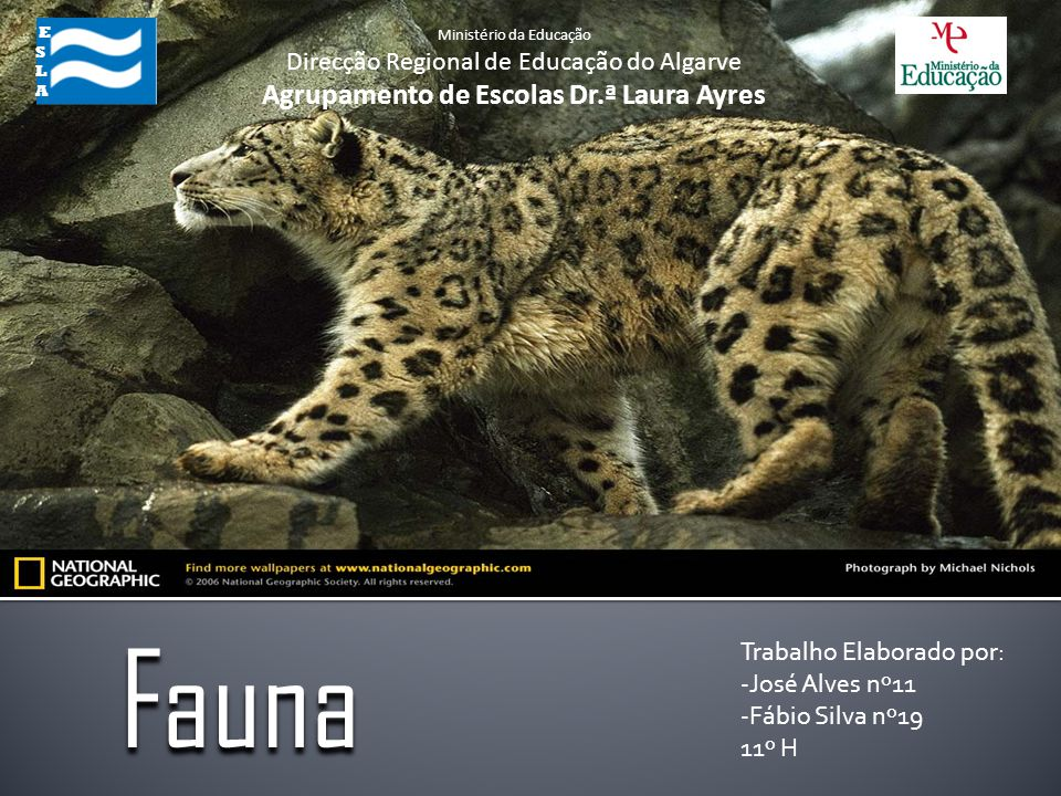 Trabalho Elaborado por: -José Alves nº11 -Fábio Silva nº19 11º H Fauna ESLA ESLA Ministério da Educação Direcção Regional de Educação do Algarve Agrup
