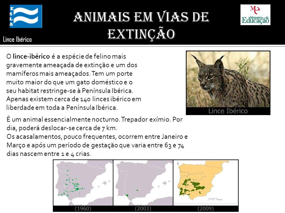 ESLA ESLA Animais em Vias de Extinção Lince Ibérico O lince-ibérico é a espécie de felino mais gravemente ameaçada de extinção e um dos mamíferos mais