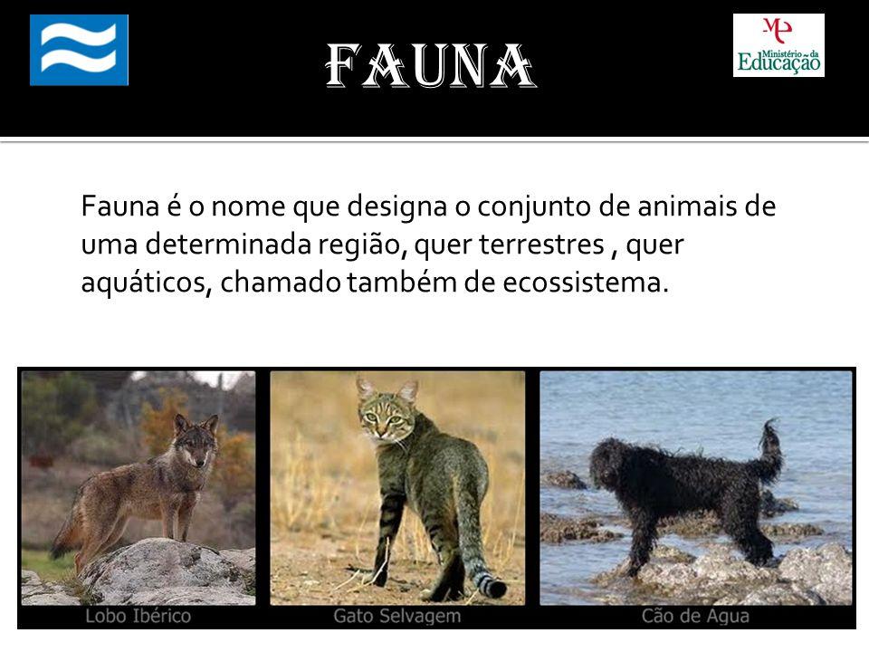 Fauna é o nome que designa o conjunto de animais de uma determinada região, quer terrestres, quer aquáticos, chamado também de ecossistema.