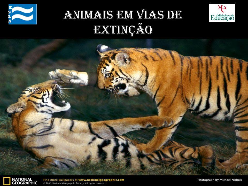 Alguns exemplos ESLA ESLA Animais em Vias de Extinção