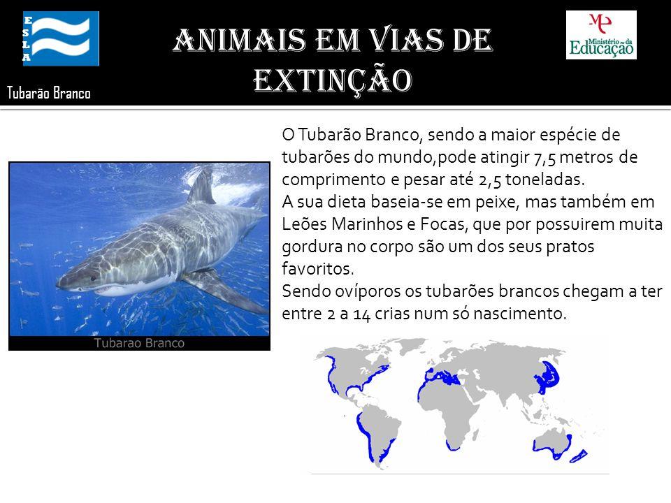 ESLA ESLA Animais em Vias de Extinção Tubarão Branco O Tubarão Branco, sendo a maior espécie de tubarões do mundo,pode atingir 7,5 metros de comprimen