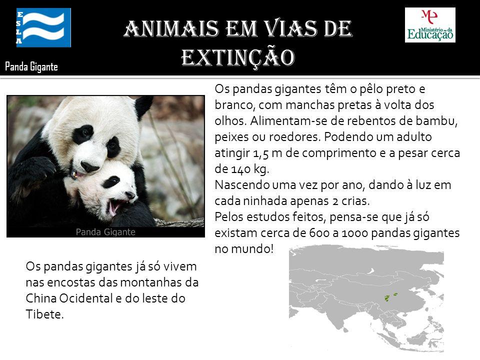 Panda Gigante ESLA ESLA Animais em Vias de Extinção Os pandas gigantes têm o pêlo preto e branco, com manchas pretas à volta dos olhos. Alimentam-se d