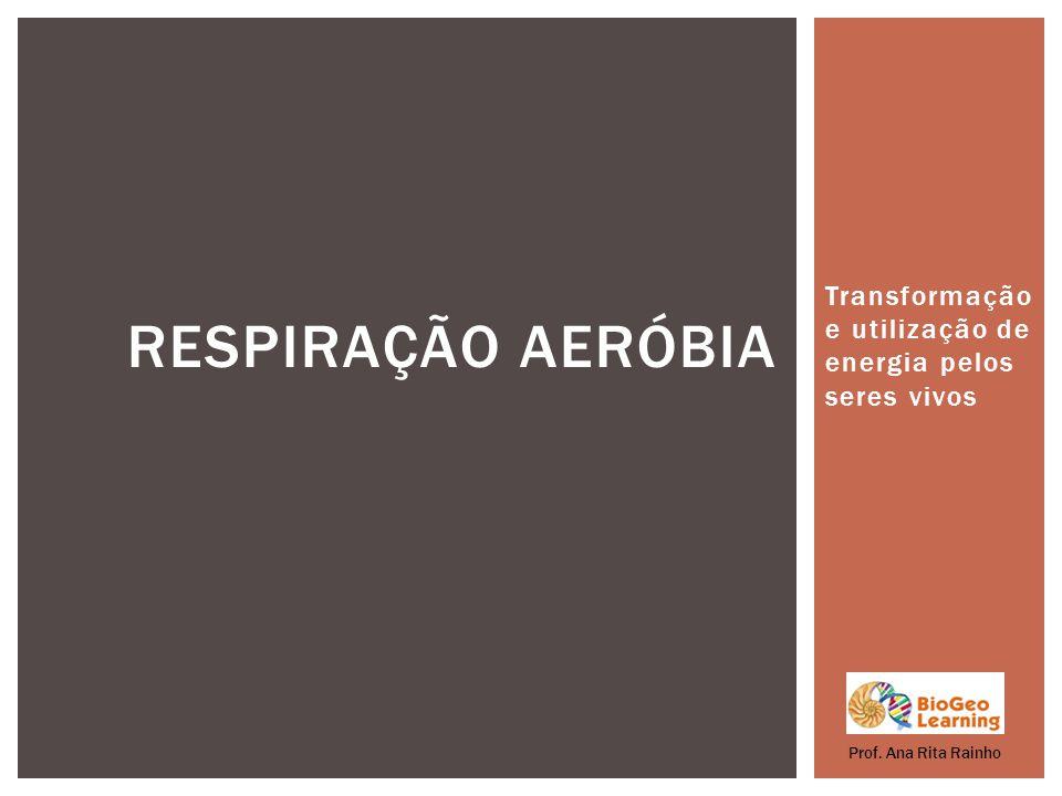Transformação e utilização de energia pelos seres vivos RESPIRAÇÃO AERÓBIA Prof. Ana Rita Rainho