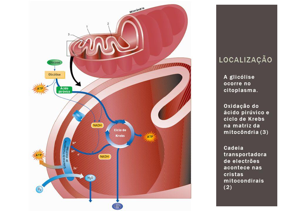 A glicólise ocorre no citoplasma.