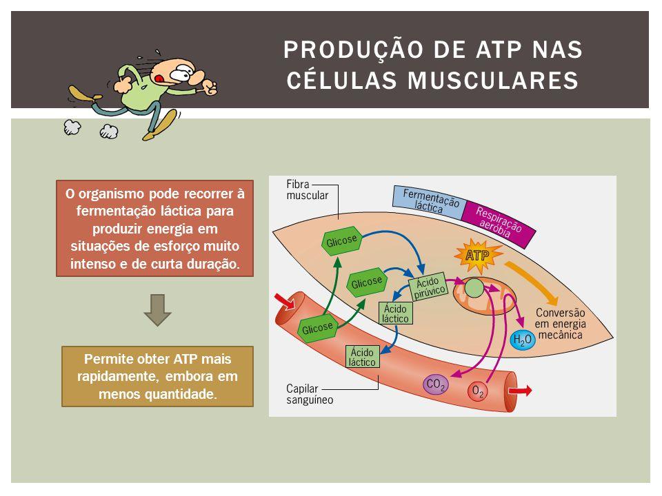 PRODUÇÃO DE ATP NAS CÉLULAS MUSCULARES O organismo pode recorrer à fermentação láctica para produzir energia em situações de esforço muito intenso e de curta duração.
