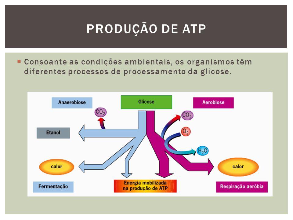 Consoante as condições ambientais, os organismos têm diferentes processos de processamento da glicose.