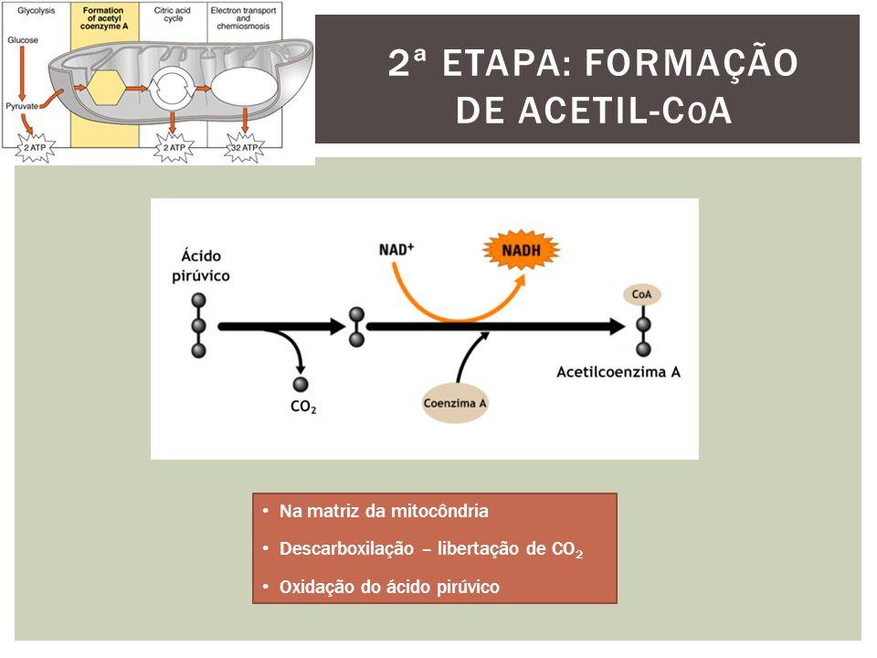 2ª ETAPA: FORMAÇÃO DE ACETIL-C O A Na matriz da mitocôndria Descarboxilação – libertação de CO 2 Oxidação do ácido pirúvico