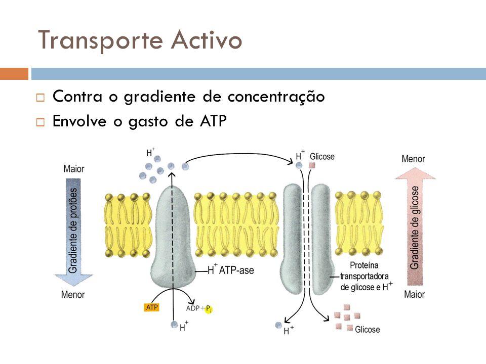 Transporte Activo Contra o gradiente de concentração Envolve o gasto de ATP