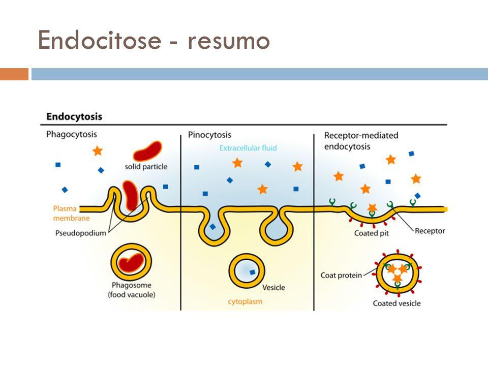 Endocitose - resumo