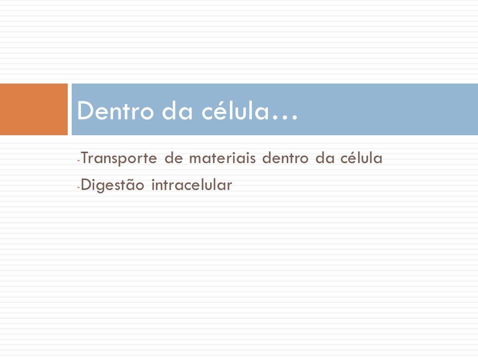 - Transporte de materiais dentro da célula - Digestão intracelular Dentro da célula…