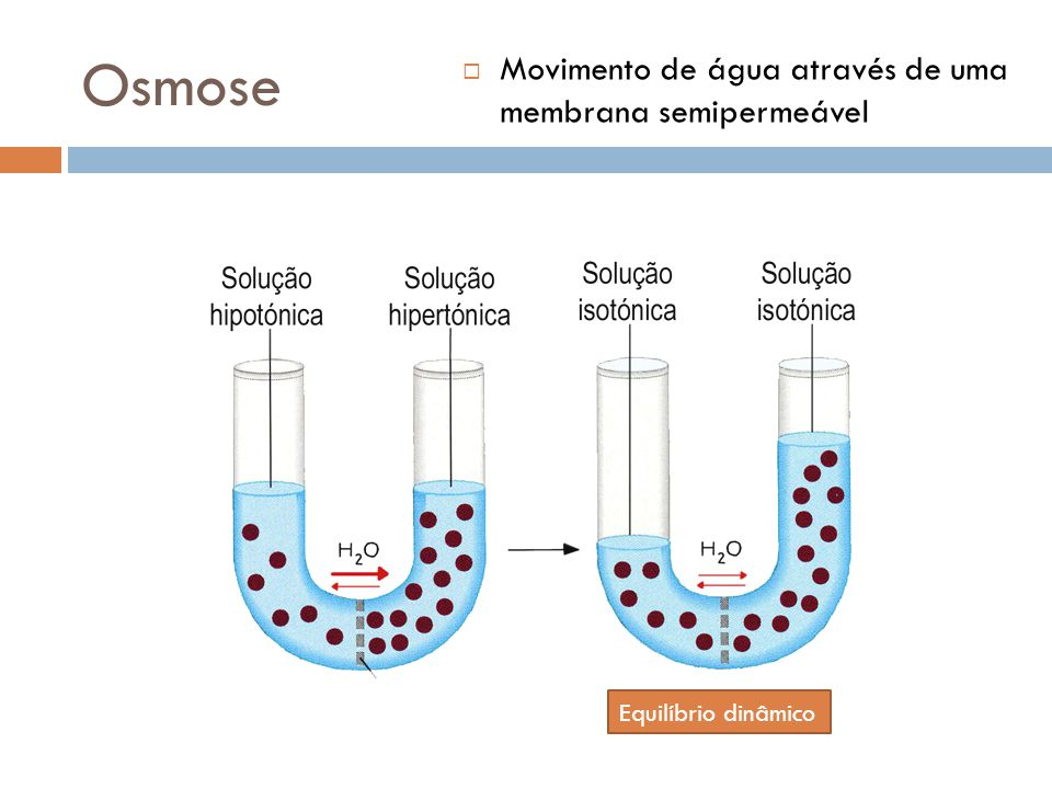Osmose Movimento de água através de uma membrana semipermeável Equilíbrio dinâmico