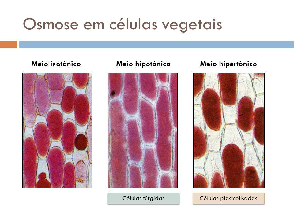 Osmose em células vegetais Meio isotónicoMeio hipotónico Células túrgidas Meio hipertónico Células plasmolisadas