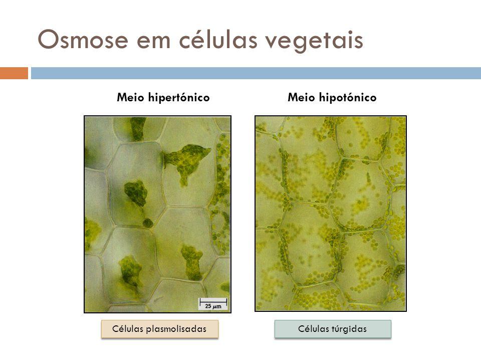 Animais vs. Vegetais