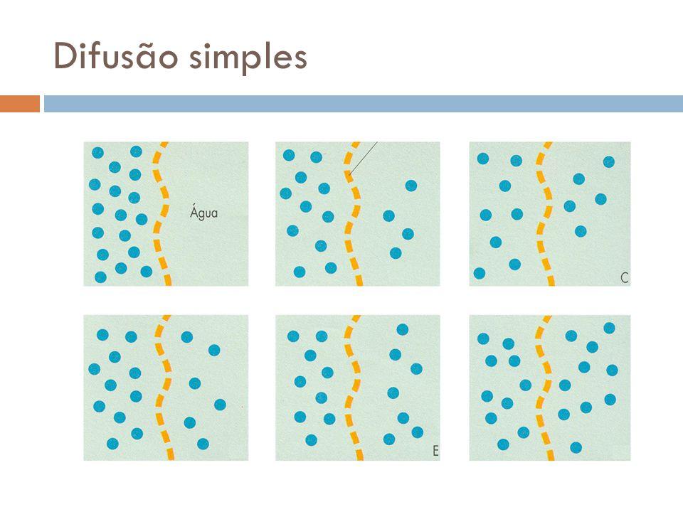 Difusão Facilitada A favor do gradiente de concentração Com o auxílio de permeases Alteração da conformação permite a passagem das moléculas