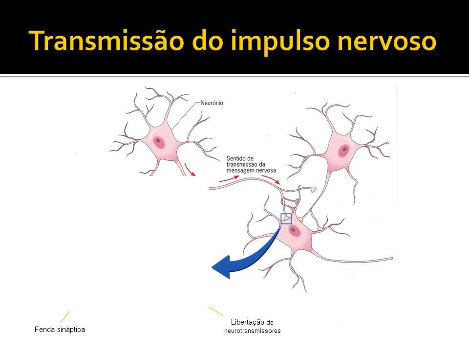 Libertação de neurotransmissores Fenda sináptica