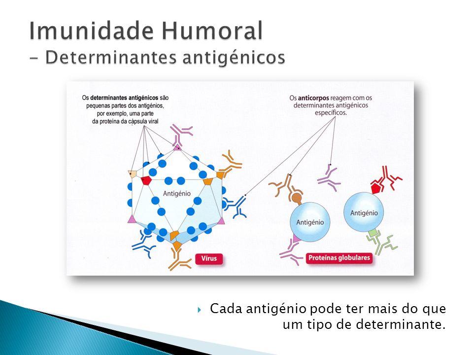 Cada antigénio pode ter mais do que um tipo de determinante.