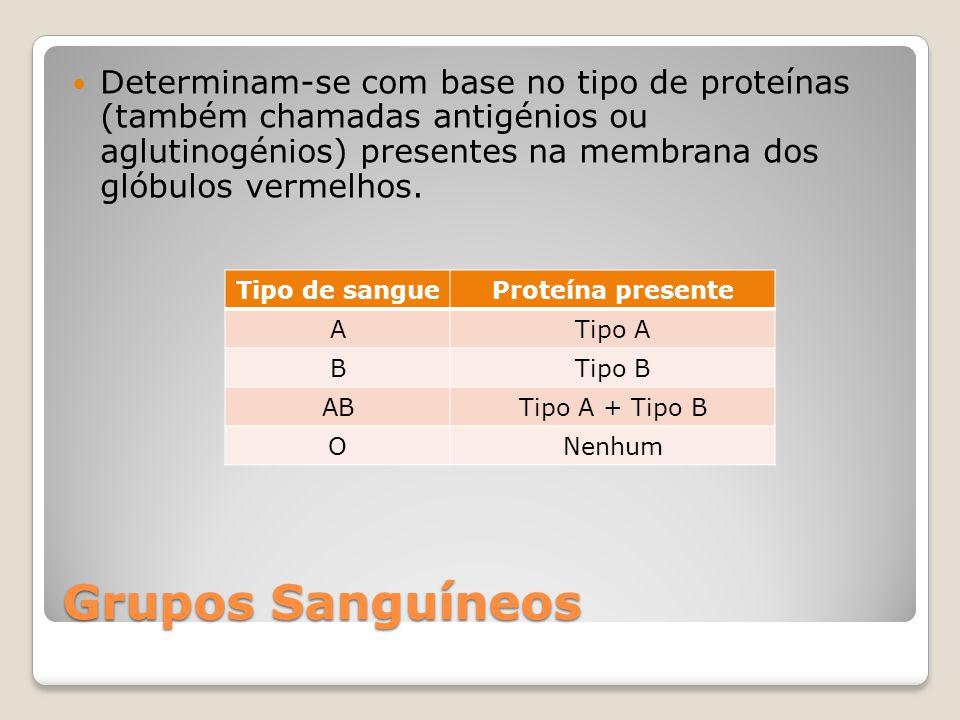 Grupos Sanguíneos Determinam-se com base no tipo de proteínas (também chamadas antigénios ou aglutinogénios) presentes na membrana dos glóbulos vermelhos.