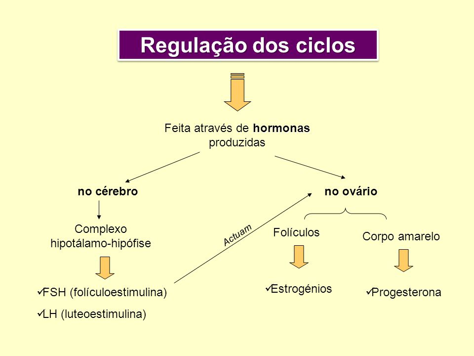 hormonas Feita através de hormonas produzidas no cérebrono ovário Complexo hipotálamo-hipófise FSH (folículoestimulina) LH (luteoestimulina) Corpo amarelo Progesterona Folículos Estrogénios A c t u a m Regulação dos ciclos