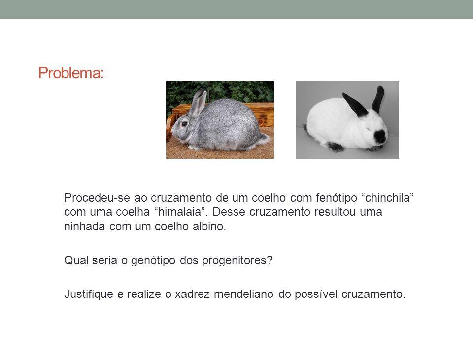 Problema: Procedeu-se ao cruzamento de um coelho com fenótipo chinchila com uma coelha himalaia. Desse cruzamento resultou uma ninhada com um coelho a