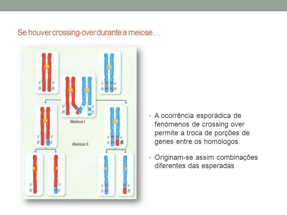 A ocorrência esporádica de fenómenos de crossing over permite a troca de porções de genes entre os homólogos. Originam-se assim combinações diferentes