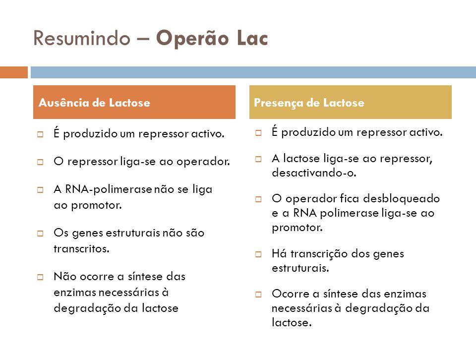 Resumindo – Operão Lac É produzido um repressor activo. O repressor liga-se ao operador. A RNA-polimerase não se liga ao promotor. Os genes estruturai