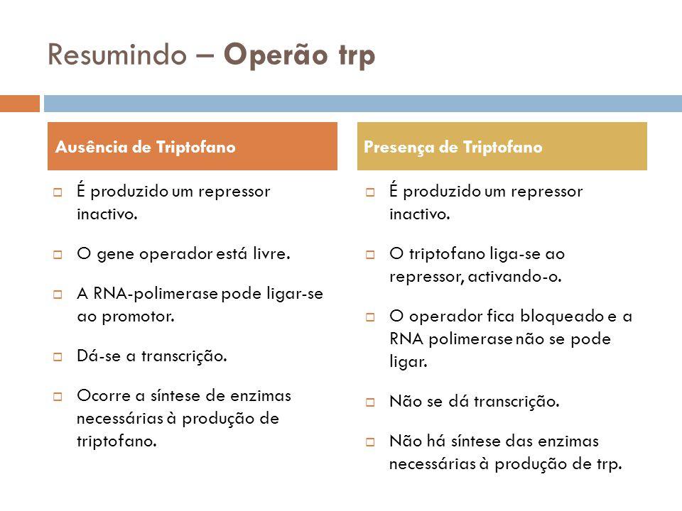 Resumindo – Operão trp É produzido um repressor inactivo. O gene operador está livre. A RNA-polimerase pode ligar-se ao promotor. Dá-se a transcrição.
