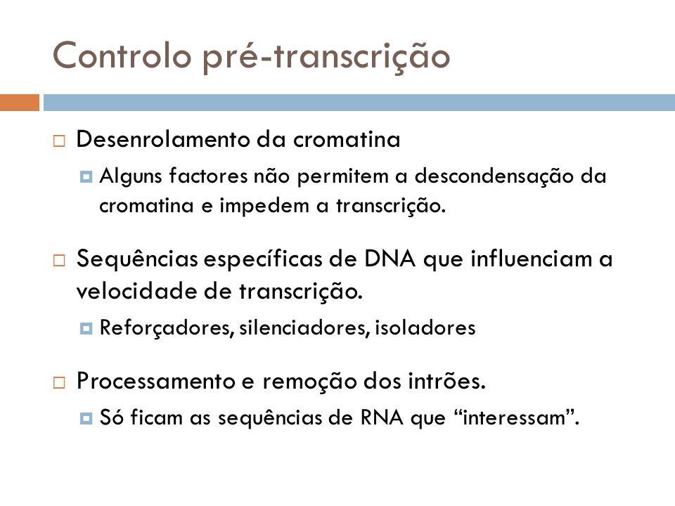 Controlo pré-transcrição Desenrolamento da cromatina Alguns factores não permitem a descondensação da cromatina e impedem a transcrição. Sequências es