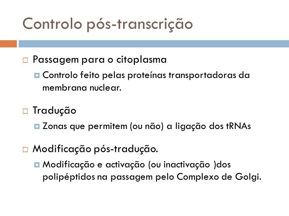 Controlo pós-transcrição Passagem para o citoplasma Controlo feito pelas proteínas transportadoras da membrana nuclear. Tradução Zonas que permitem (o