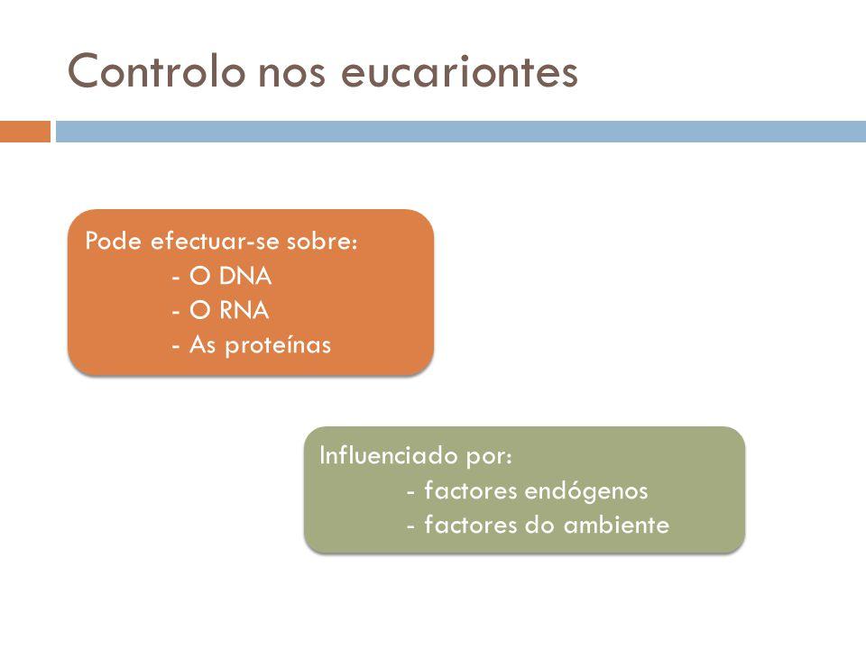 Controlo nos eucariontes Pode efectuar-se sobre: - O DNA - O RNA - As proteínas Pode efectuar-se sobre: - O DNA - O RNA - As proteínas Influenciado po