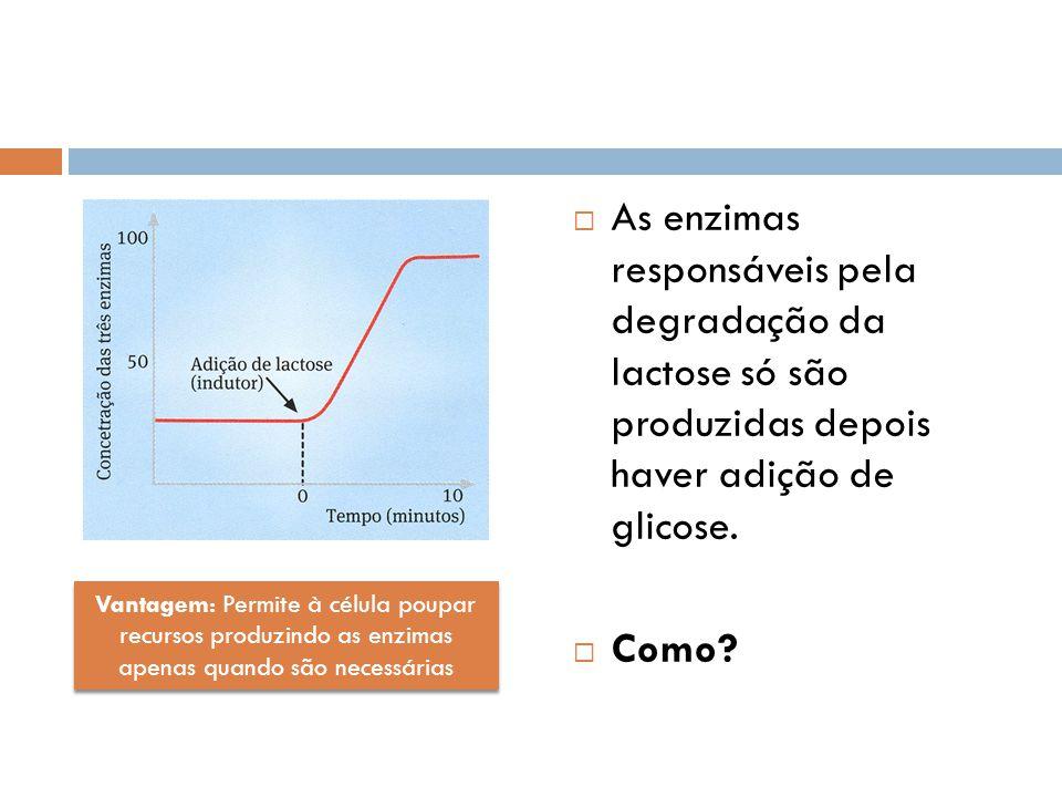 As enzimas responsáveis pela degradação da lactose só são produzidas depois haver adição de glicose. Como? Vantagem: Permite à célula poupar recursos