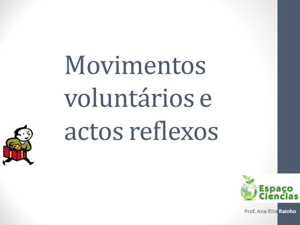 Movimentos voluntários Estímulo sensorial Neurónios sensoriais Neurónios motores Integração da informação Determinação da resposta Resposta Receptor sensorialEncéfalo Órgão efector
