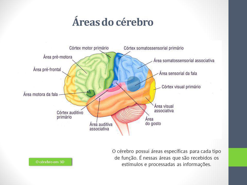 Áreas do cérebro O cérebro em 3D O cérebro possui áreas específicas para cada tipo de função. É nessas áreas que são recebidos os estímulos e processa
