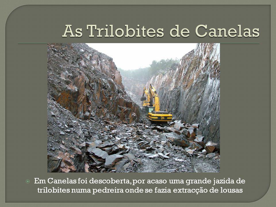 Em Canelas foi descoberta, por acaso uma grande jazida de trilobites numa pedreira onde se fazia extracção de lousas