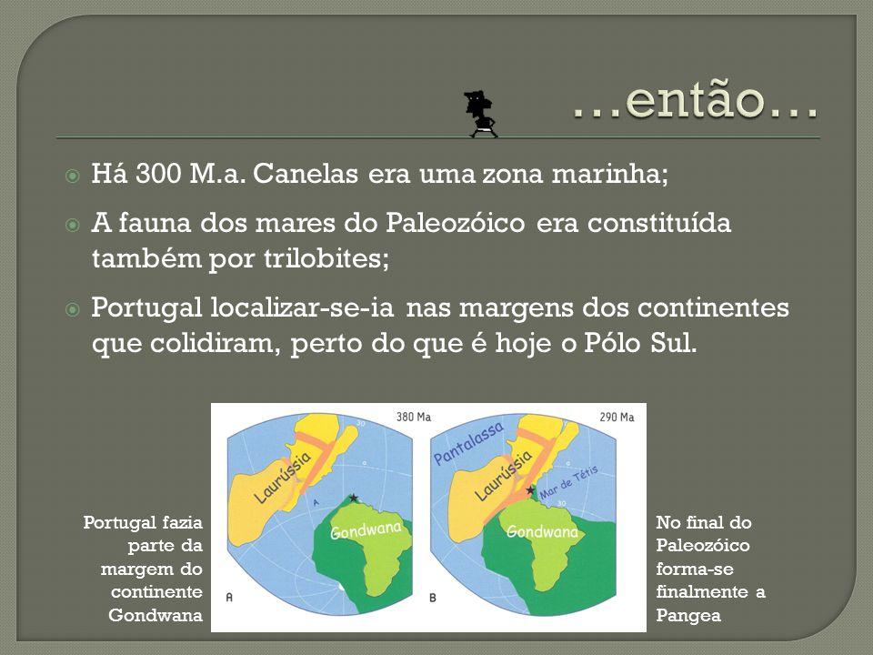 Há 300 M.a. Canelas era uma zona marinha; A fauna dos mares do Paleozóico era constituída também por trilobites; Portugal localizar-se-ia nas margens