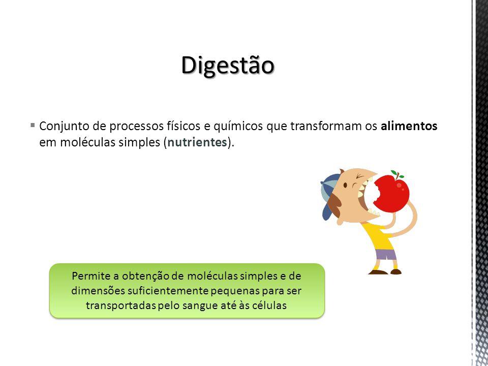 Conjunto de processos físicos e químicos que transformam os alimentos em moléculas simples (nutrientes). Permite a obtenção de moléculas simples e de