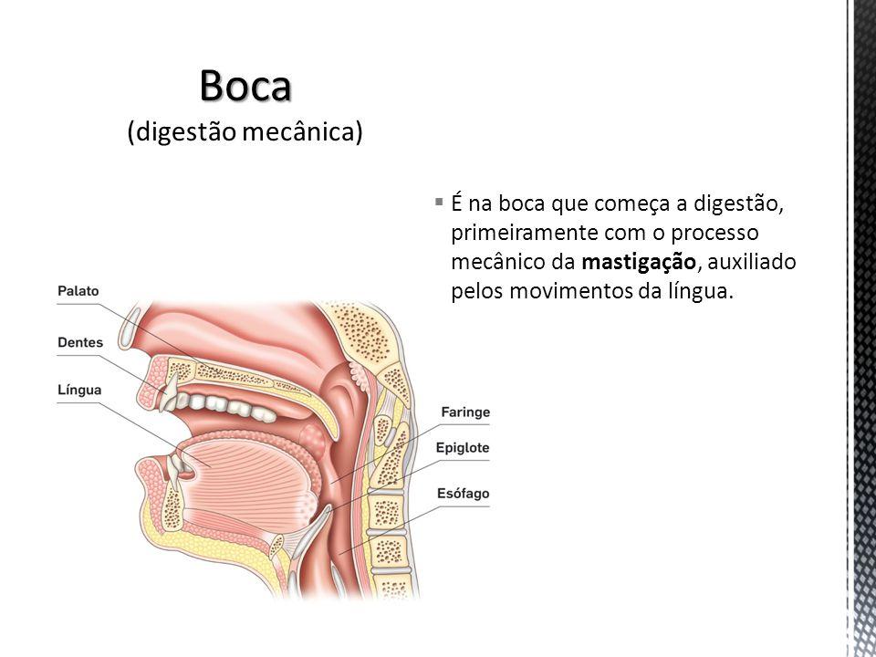 É na boca que começa a digestão, primeiramente com o processo mecânico da mastigação, auxiliado pelos movimentos da língua.