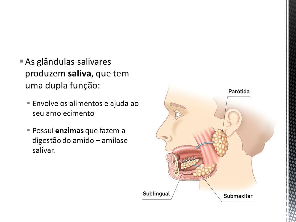 As glândulas salivares produzem saliva, que tem uma dupla função: Envolve os alimentos e ajuda ao seu amolecimento Possui enzimas que fazem a digestão