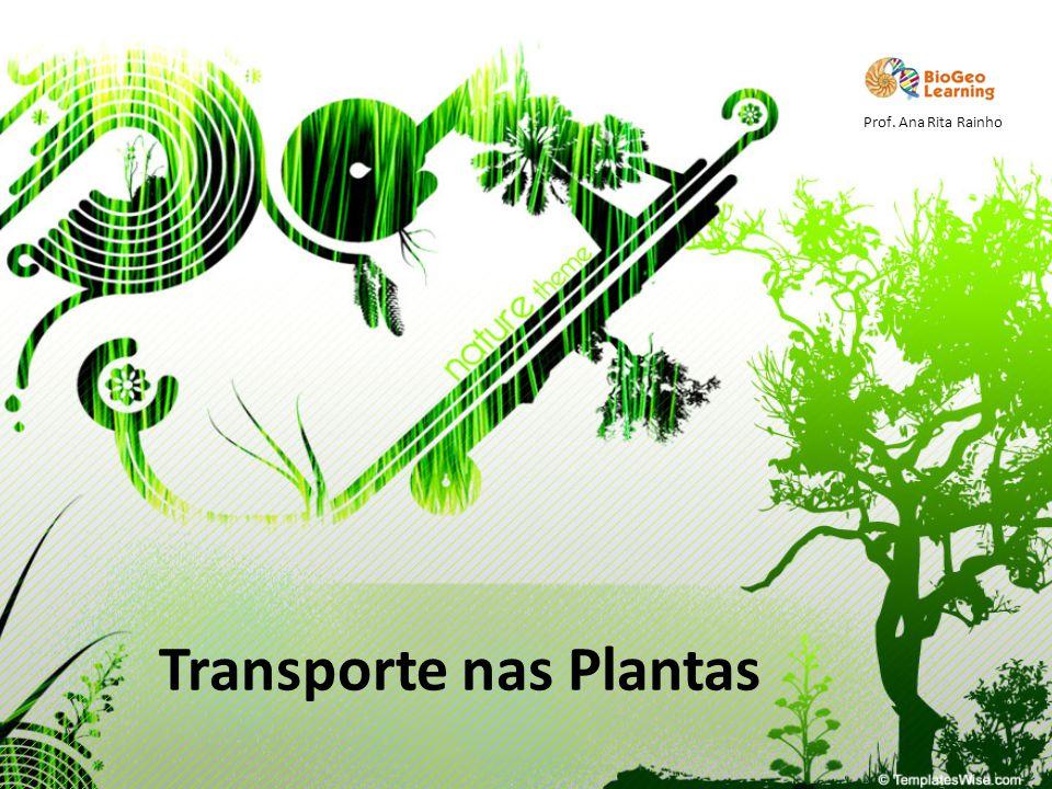 Transporte nas Plantas Prof. Ana Rita Rainho