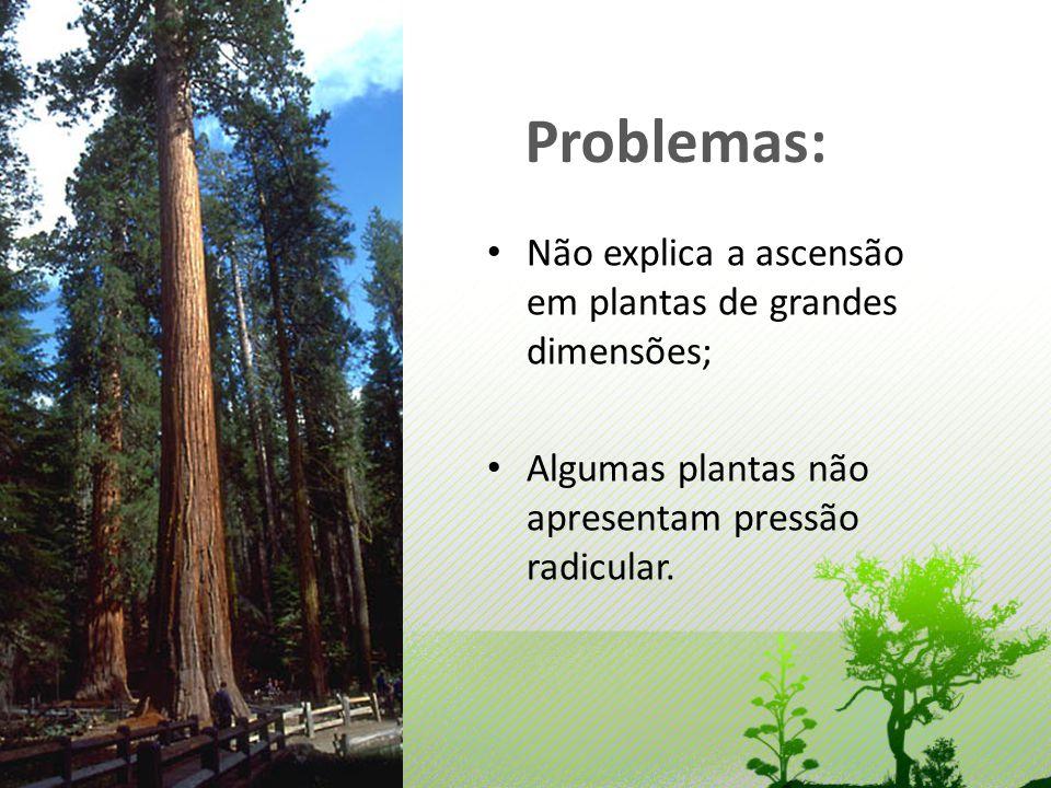 Problemas: Não explica a ascensão em plantas de grandes dimensões; Algumas plantas não apresentam pressão radicular.