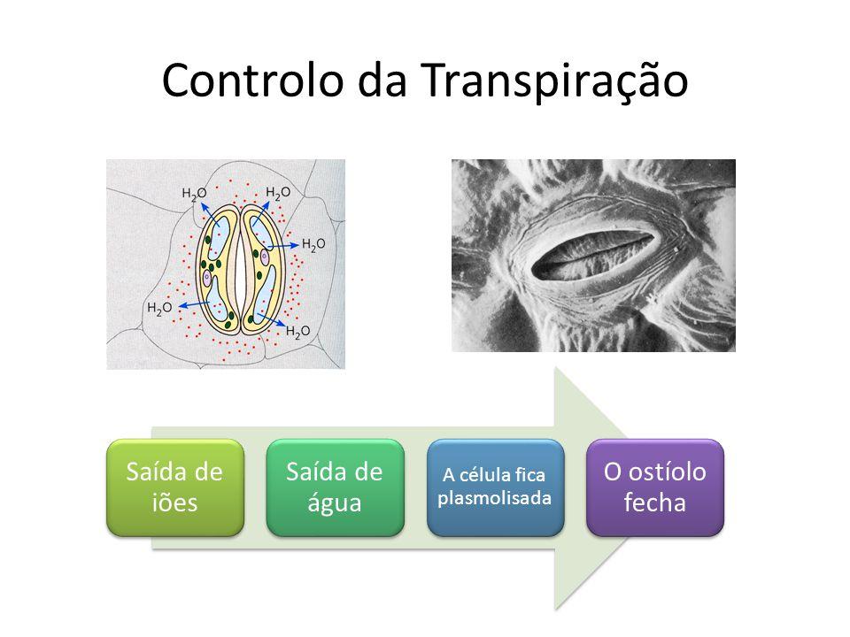 Controlo da Transpiração Saída de iões Saída de água A célula fica plasmolisada O ostíolo fecha