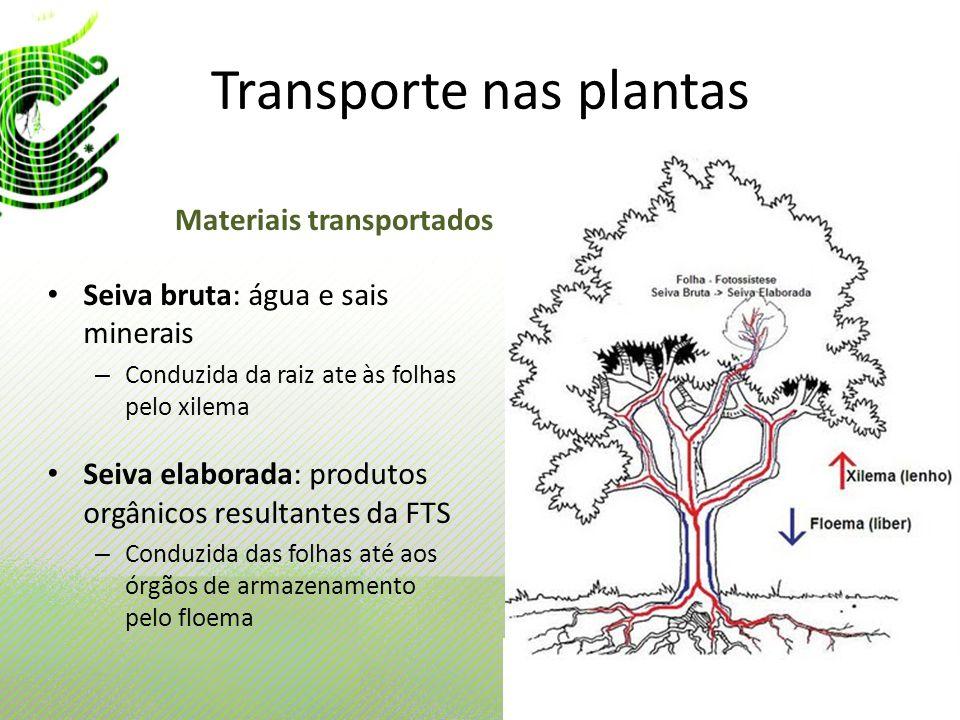 Transporte nas plantas Seiva bruta: água e sais minerais – Conduzida da raiz ate às folhas pelo xilema Seiva elaborada: produtos orgânicos resultantes
