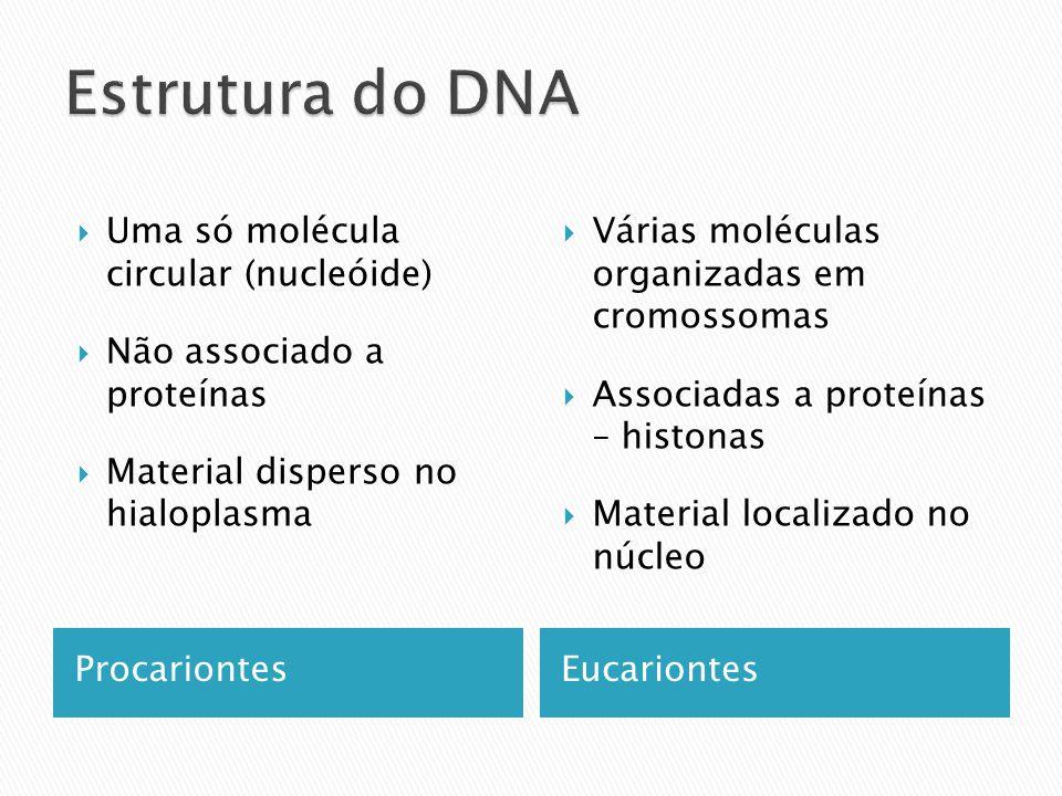 ProcariontesEucariontes Uma só molécula circular (nucleóide) Não associado a proteínas Material disperso no hialoplasma Várias moléculas organizadas em cromossomas Associadas a proteínas – histonas Material localizado no núcleo