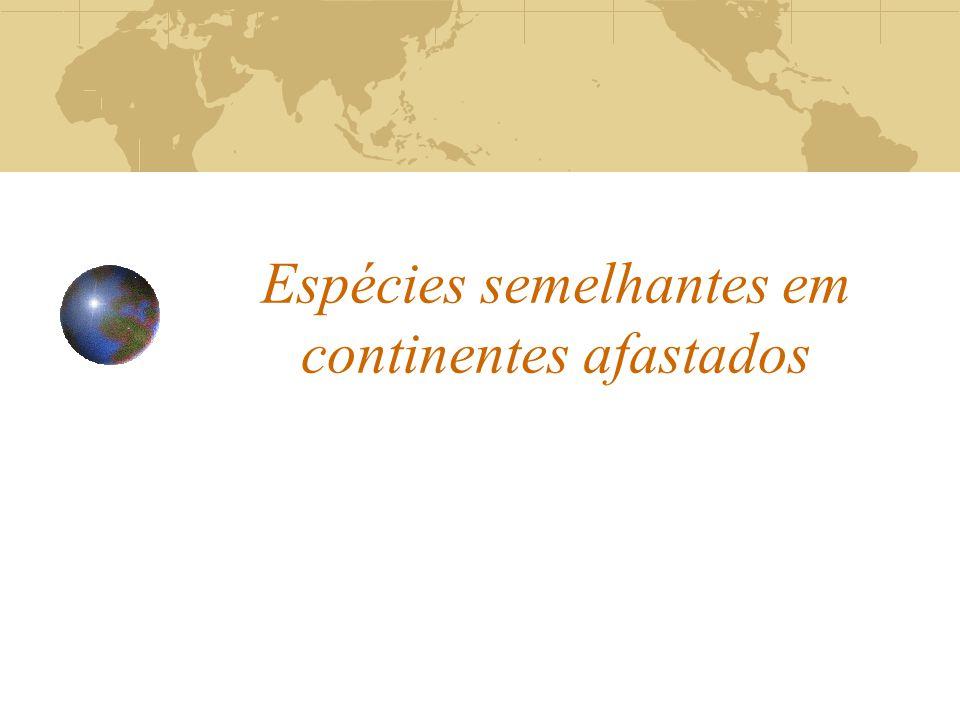 Espécies semelhantes em continentes afastados