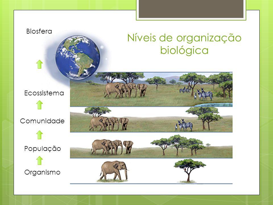 Níveis de organização biológica Organismo População Comunidade Ecossistema Biosfera