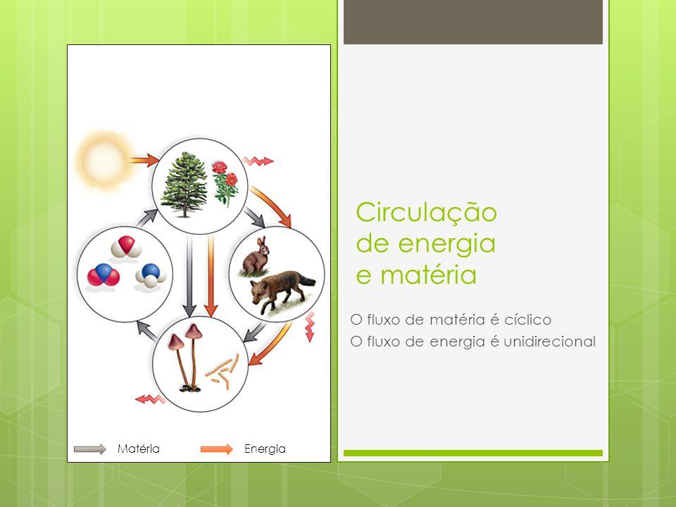 Circulação de energia e matéria O fluxo de matéria é cíclico O fluxo de energia é unidirecional MatériaEnergia