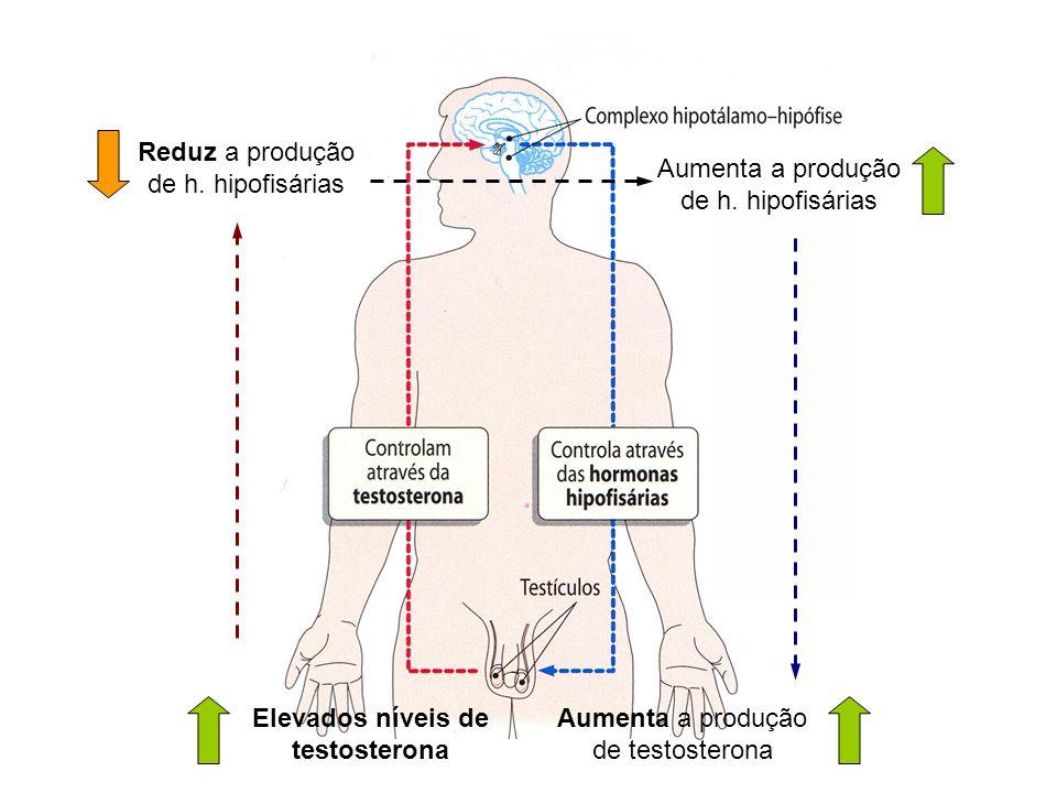 Elevados níveis de testosterona Reduz a produção de h. hipofisárias Aumenta a produção de h. hipofisárias Aumenta a produção de testosterona