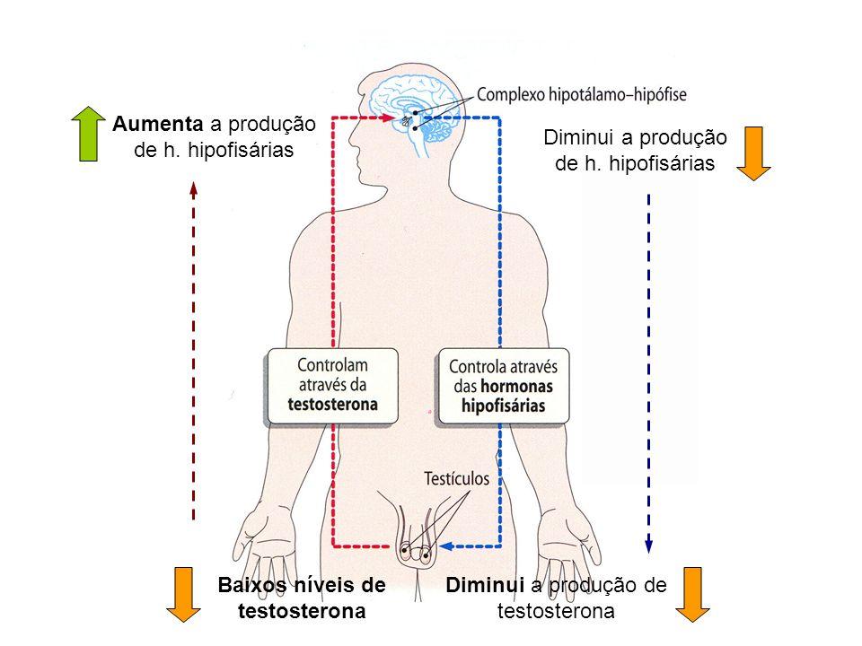 Diminui a produção de h. hipofisárias Aumenta a produção de h. hipofisárias Diminui a produção de testosterona Baixos níveis de testosterona