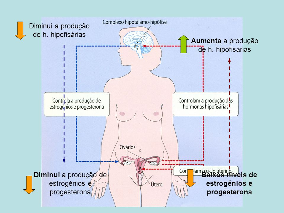 Diminui a produção de h. hipofisárias Aumenta a produção de h. hipofisárias Diminui a produção de estrogénios e progesterona Baixos níveis de estrogén