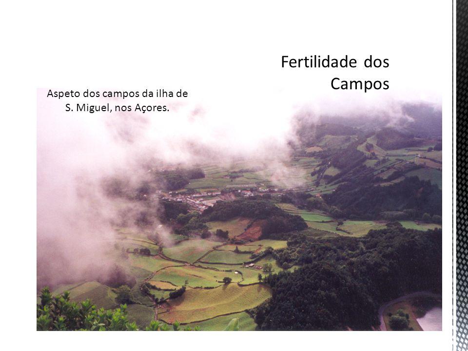 Aspeto dos campos da ilha de S. Miguel, nos Açores.